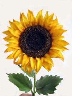 {Spectacular sugar Sunflower by Sugar Art Studio}