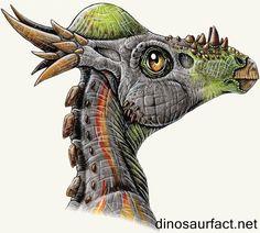 Stygimoloch – possibly a sub-adult Pachycephalosaurus