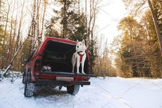 Husky in the trunk of an SUV by konstantin.tronin on @creativemarket
