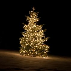 Fragrance:  Victorian Christmas (EL) by the pound.  Fresh cut pine boughs from the deep woods mingle with rich spice. A nostalgic, sophisticated fragrance.