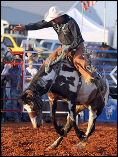Riding a bucking bronc - cowboys & rodeo excitement !!
