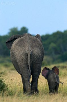 Elephant mother and newborn calf - 42-50860911 - Rights Managed - Stock Photo - Corbis