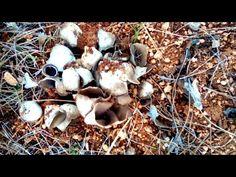 Have you ever heard of this Mushroom? How to make egg ear mushroom. Food Art, A Food, Kurt, Food Pyramid, Food Truck, Baby Food Recipes, Food Hacks, Food Videos, Stuffed Mushrooms