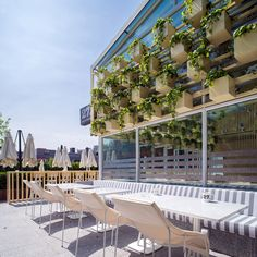 "Influenced by this cafe's organic menu, its ""healthy"" building has been lined with greenery and natural materials."