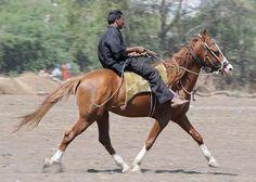 Slow Revel by Horses Of India, via Flickr