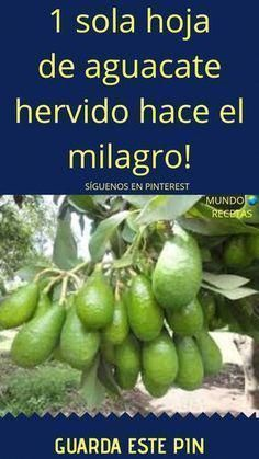 Natural Health Remedies Home Remedies Milagro Water Recipes Medicinal Plants Health And Nutrition Health And Wellness Health Fitness Alternative Medicine Natural Health Remedies, Home Remedies, Cure Diabetes Naturally, Diabetes Treatment, Atkins Diet, Medicinal Plants, Fun To Be One, Health Tips, Health Products