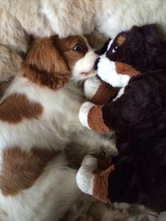 Saartje met knuffel