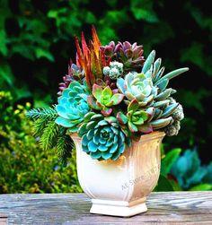 203pcs/pack,Rare Mix Lithops Seeds Living Stones Succulent Cactus Organic Garden Bulk flower Seeds,bonsai plant for balcony