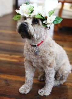 Wedding dog flower crown Toni Kami❀Flowers in their coats❀ Baby Animals, Cute Animals, Funny Animals, Free People Blog, Dog Wedding, Wedding Stuff, Wedding Flowers, Wedding Ideas, Wedding Dresses