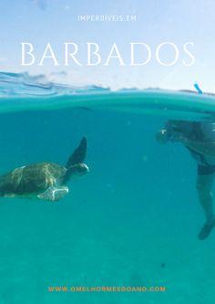 Barbados, umas das mais belas ilhas do Caribe, além de praias de cor azul turquesa, tem muita vida marinha. Nadas com tartarugas, surfar, snorkel e mergulho são algumas das atividades mais legais para se fazer por lá
