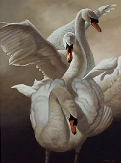 Artodyssey: William Wolk | BALLETlove | SWANLAKE | SWANS | pinned by http://www.cupkes.com/
