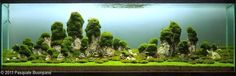 aquascaping floating island - Google Search