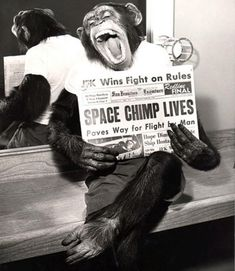 """On the morning of January 31, 1961, in south Florida, a 5-year-old chimpanzee — dubbed """"Ham"""" by his handlers — ate a breakfast of baby cereal, condensed milk, vitamins and half an egg. Then the unassuming 37-pound primate went out and made aeronautic history: Aboard a NASA space capsule, traveling thousands of miles an hour almost 160 miles above the Earth, he became the first chimp in space."""