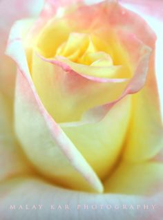 Yellow & pale pink