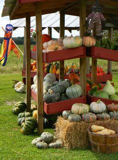 Farmer's vegetable stand