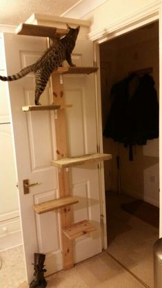 Free cat tree plans and cat furniture ideas to help you build a cool cat room for your kitties to keep them happy, healthy and out of trouble. Cool Cat Trees, Diy Cat Tree, Cool Cats, Diy Jouet Pour Chat, Cat Tree Plans, Cat Stairs, Cat Towers, Cat Shelves, Shelving