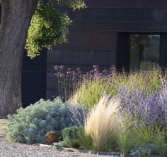 modern meadow garden inspiration - plantings of ornamental grasses and mixed flowers (Miscanthus, Stipa, Festuca, Verbena, Euphorbia). by marguerite