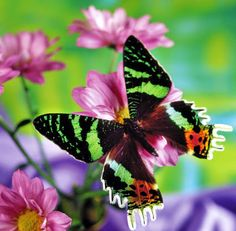Animals ,Flowers & Nature (Hayvan,Bitki&Doğa)– Сообщество– Google+