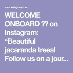 "WELCOME ONBOARD ✈️ on Instagram: ""Beautiful jacaranda trees! Follow us on a journey worldwide 🌍 Inspiration by @thedroneman LOCATION #kirribilli #sydney🇦🇺 ALL PHOTOS BELONG…"" Jacaranda Trees, Welcome, Sydney, Journey, Places, Photos, Inspiration, Beautiful, Instagram"