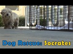 Socrates. PLEASE NOTE: These rescues are handled by highly trained professionals. Please share this video and help support this great cause, and help all animals who are rescued to find a loving, permanent home. Websites: http://www.hopeforpaws.org (Company) & http://www.billfoundation.org (Application for Adoption).
