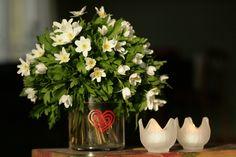 Ilahduta äitiä ja poimi kukkia. GloLite Forever Mango kynttiläpurkki sopii myös maljakoksi!   #valkovuokko #vitsippa #glasjlus #morsdag #blomma