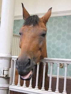 Royal Mews: Horse in the stable