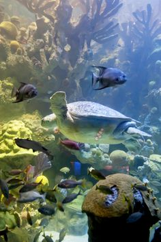 New England Aquarium offers discounted student tickets year round. FREE for students Sept 17   www.neaq.org/college.