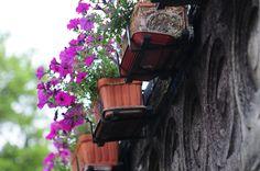Flowers in the balcony