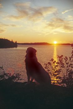 A dog watching Sunset in Ontario_ Canada