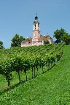 Niemiecka winnica z pięknym budynkiem w tle