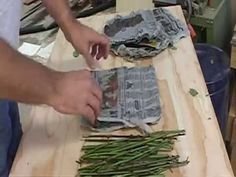 This is a simple method for rooting rose cuttings using newspaper and plastic bags. It works well during winter when misting is not possible. This works for ...