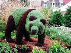 Topiary Garden, Garden Art, Home And Garden, Screened Pool, Indoor Water Garden, Evergreen Shrubs, Growing Plants, Panda Bear, Cactus Plants