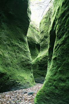 Mossy gorge in Shishamonai, Hokkaido, Japan 支寒内 北海道