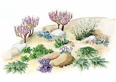 Paahteisen paikan huolettomat kivikkokasvit kukkivat värikkäästi. Kaunispintaiset kivet ja vihreät havukasvit luovat kontrastin väriloistolle. Tutustu Viherpihan istutussuunnitelmaan kivikkokasveille.