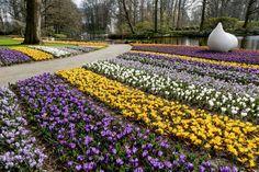 Közel hónapig ismét látogatható Keukenhofban a csodálatos virágpark. http://balkonada.cafeblog.hu/2016/03/25/megnyilt-a-vilag-legnagyobb-viragos-kertje/
