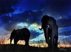 Save the elephants Funny Elephant, Elephant Images, Elephant Pictures, Small Elephant, Asian Elephant, Elephant Love, All About Elephants, Save The Elephants, Wild Animals Photography