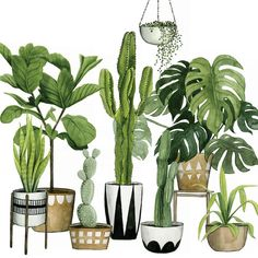 East Urban Home 'Plant Haven I' Graphic Art Print on Canvas Size: Plant Painting, Plant Drawing, Plant Art, Plant Decor, My Canvas, Canvas Wall Art, Canvas Prints, Canvas Size, Watercolor Plants