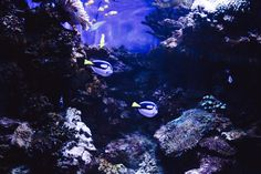 two blue-and-black fishes under the sea photo – Free Water Image on Unsplash The Donna Reed Show, What's It Gonna Be, Jeremiah Johnson, The English Patient, Daniel Johns, Water Images, World Movies, Batman Begins, Water Animals