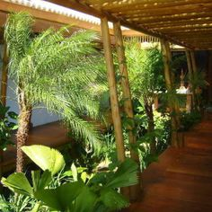 M s de 1000 ideas sobre jardines tropicales en pinterest for 1000 ideas para el jardin
