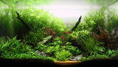 This is blasphemy I hear you say. Hold on, let me show my case on why aquarium plastic plants can be better than live plants here in this very blog post.