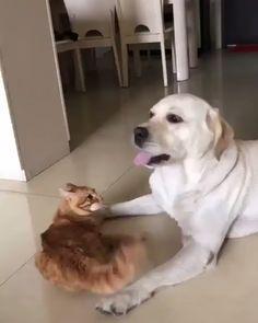 смешные животные tiere, niedliche tiere и lustige tiere. Cute Funny Animals, Cute Baby Animals, Funny Dogs, Cute Cats, Funny Humor, Cute Animal Videos, Funny Animal Pictures, Cute Animal Gif, Animal Memes