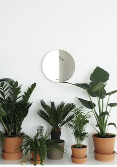 Botanical beauty :: plants :: cacti :: nature :: free your wild :: see more untamed garden decor + style inspiration Interior Plants, Interior And Exterior, Botanical Interior, Potted Plants, Indoor Plants, Small Plants, Garden Plants, Plantas Indoor, Cactus Plante