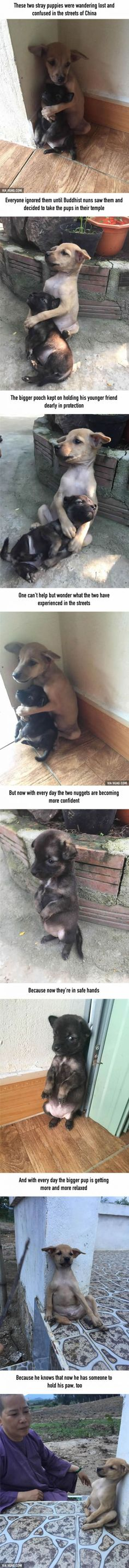 Stray Puppies Won't Stop Hugging Each Other Since They Were Rescued 9gag.com/