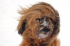 Umfrage: Mag dein Hund Schnee? ⋆ Hunde