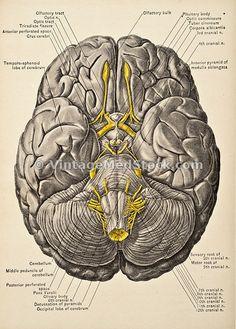 Neuroscience source 4 me