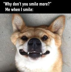 Memesable, the funny memes web application. Funny Morning Pictures, Funny Pictures, Funny Pics, Funny Animal Memes, Funny Animals, Funny Memes, Funny Shit, I Smile, Your Smile