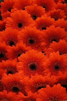 NCG FLOWER MARKET 01, via Flickr.