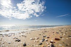 un mondo di conchiglie regalate dal mare