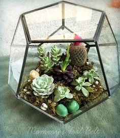 DIY Hanging Terrarium Succulent Garden - great craft idea to do with kids! Step by step instructions show how to plant and arrange cacti and other succulents in hanging glass containers! Fun indoor garden!