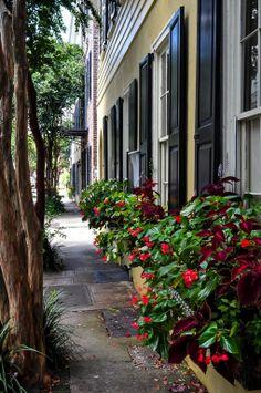 window boxes, charleston | architectural details + container gardening